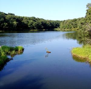 Marion Lake by Bill Stamatis.